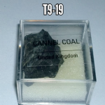 Cannel Coal natural mineral/gemstone specimen in display case